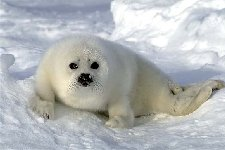 seal pup, isn't he the cutest!